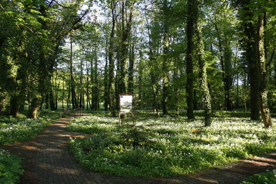 Galeria Wiosenny park w Pawłowiczkach